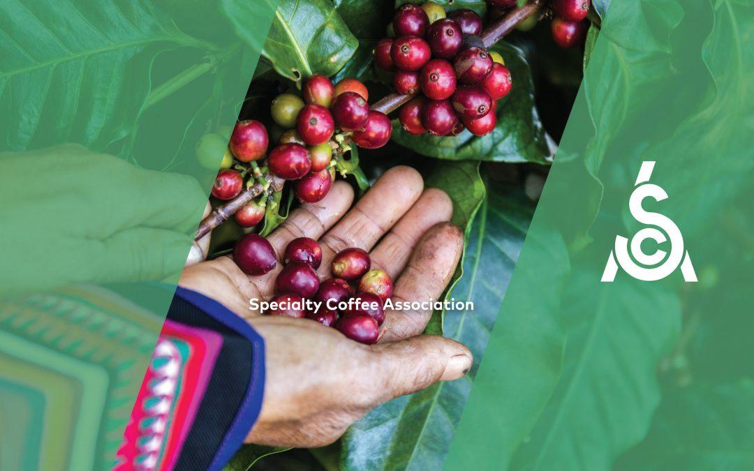 Certificación de café de especialidad